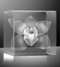 Glazen kubus 3D orchydee 6x6x6 cm prijs €129,00