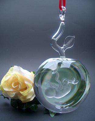 Foetus-Baby in glazen appel als hanger. Appel is gevuld met gedestilleerd water € 174,95