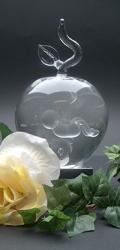 Foetus-Baby in glazen bol met tak en blad. Bol is gevuld met gedestilleerd water € 172,50 (1)